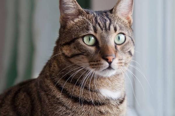 Los gatos se comerán a un humano muerto si tienen la oportunidad, según un estudio